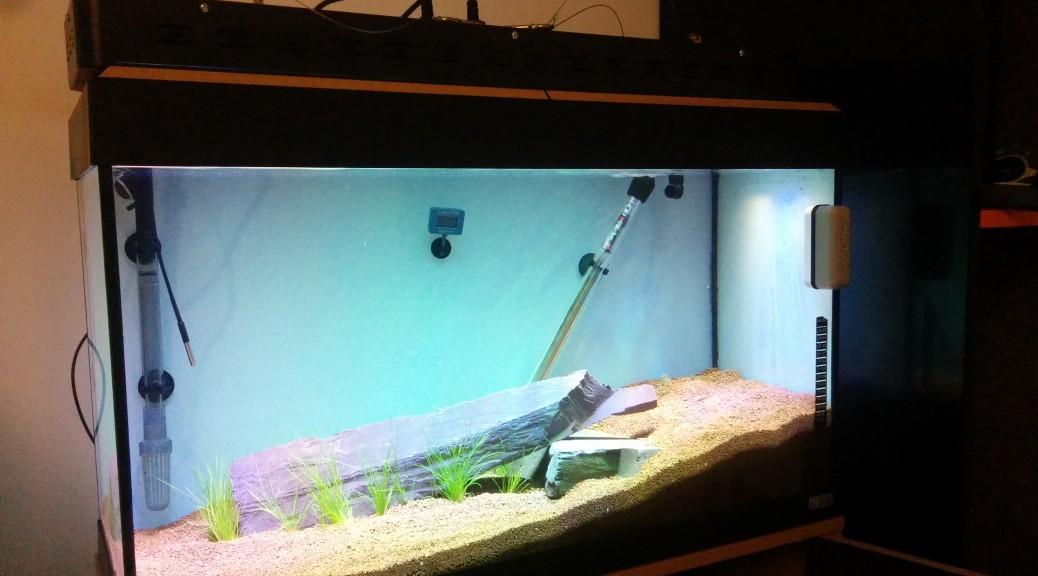 Aquarium Stage 0