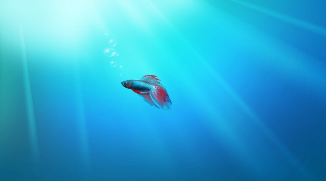 windows-10-wallpaper-hd-1080p-fish-image